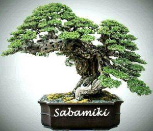 Kerti bonsaiok és alakfák (Niwaki)