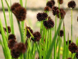 Vízi növények